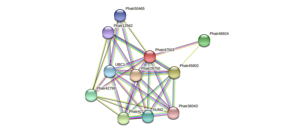 Phatr47503 protein (Phaeodactylum tricornutum) - STRING interaction network