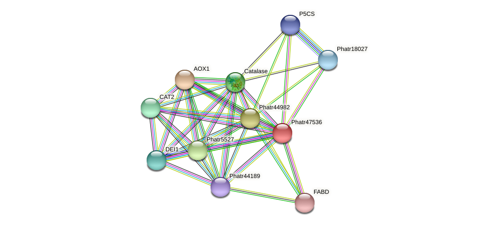 Phatr47536 protein (Phaeodactylum tricornutum) - STRING interaction network