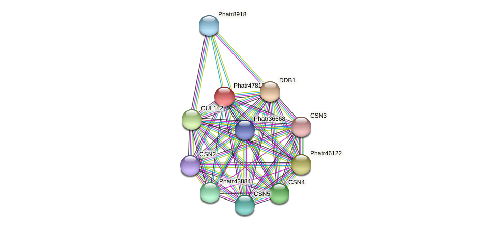 Phatr47817 protein (Phaeodactylum tricornutum) - STRING interaction network