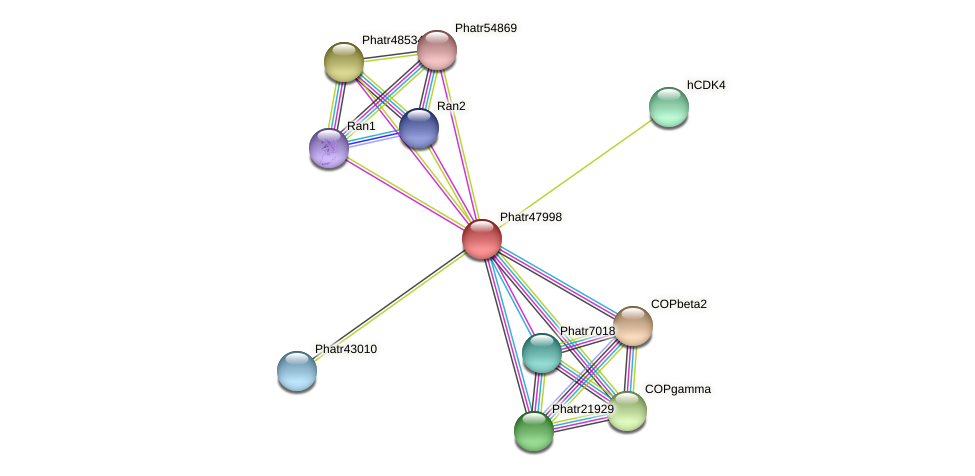 Phatr47998 protein (Phaeodactylum tricornutum) - STRING interaction network