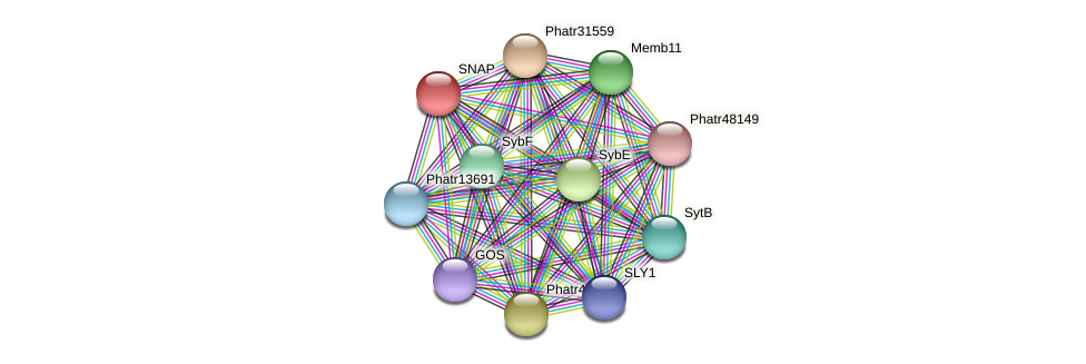 SNAP protein (Phaeodactylum tricornutum) - STRING interaction network