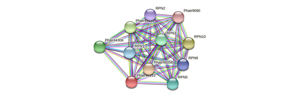 Phatr48163 protein (Phaeodactylum tricornutum) - STRING interaction network
