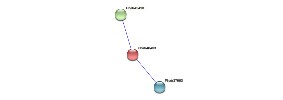 Phatr48408 protein (Phaeodactylum tricornutum) - STRING interaction network