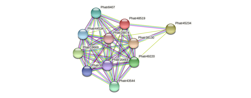 Phatr48519 protein (Phaeodactylum tricornutum) - STRING interaction network