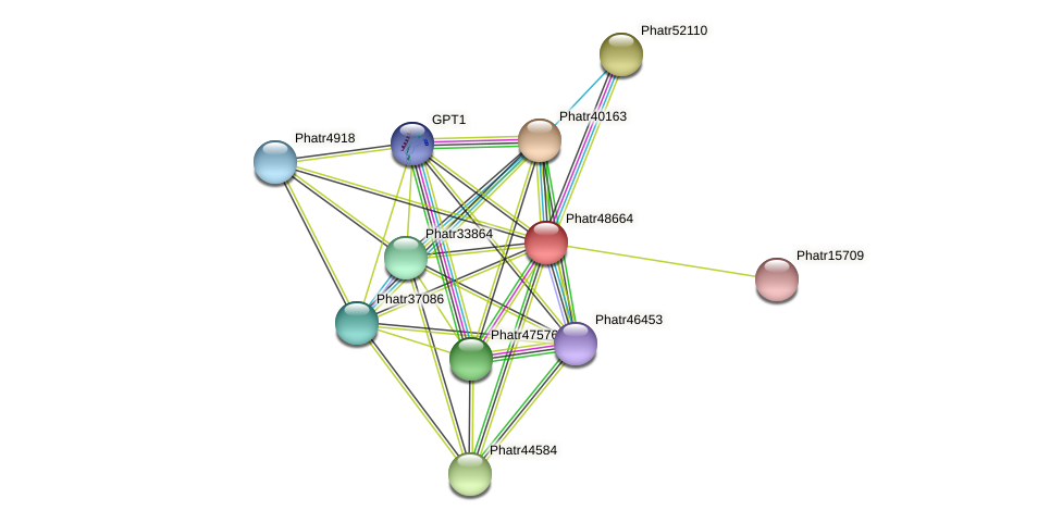 Phatr48664 protein (Phaeodactylum tricornutum) - STRING interaction network