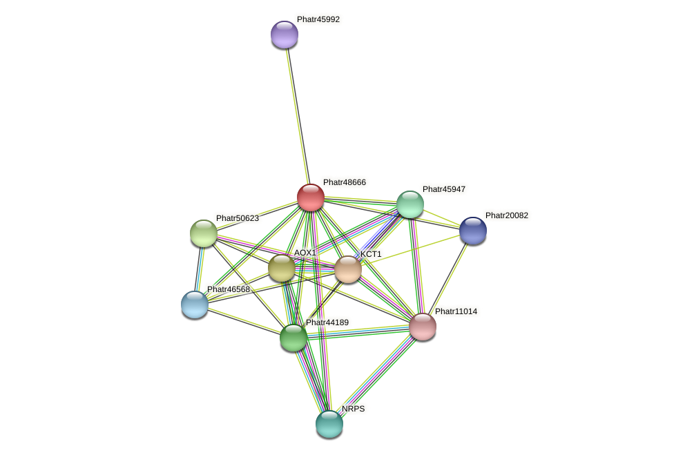 Phatr48666 protein (Phaeodactylum tricornutum) - STRING interaction network