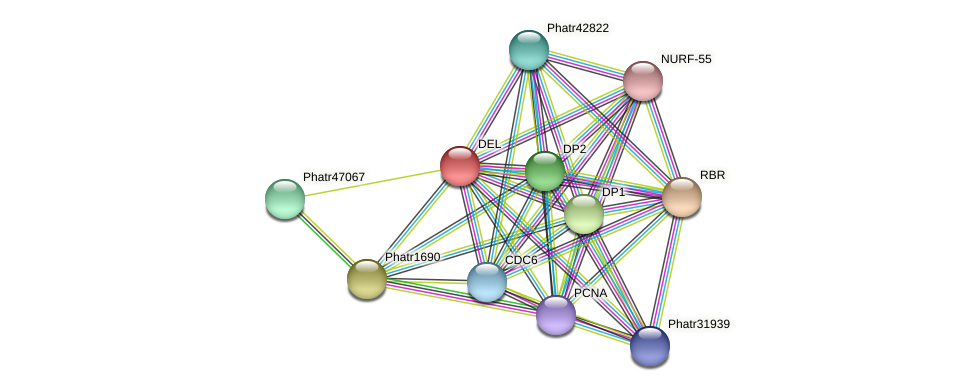 DEL protein (Phaeodactylum tricornutum) - STRING interaction network