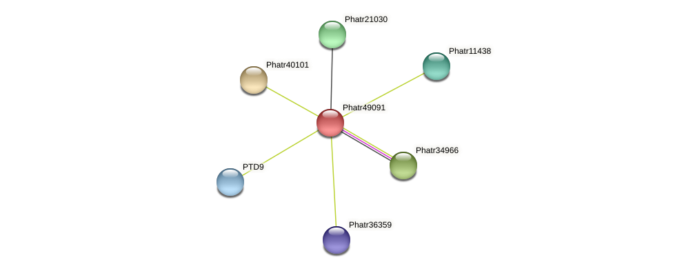 Phatr49091 protein (Phaeodactylum tricornutum) - STRING interaction network