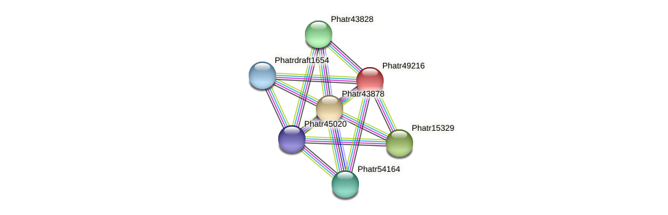Phatr49216 protein (Phaeodactylum tricornutum) - STRING interaction network
