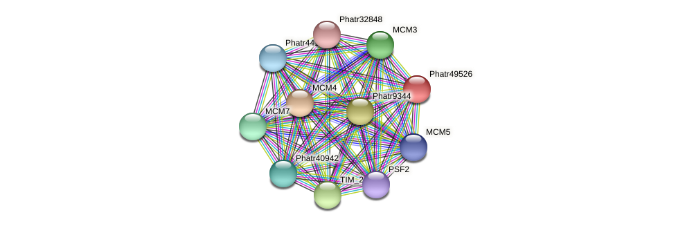 Phatr49526 protein (Phaeodactylum tricornutum) - STRING interaction network