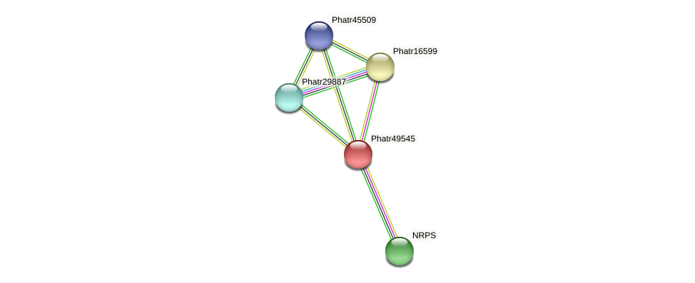 Phatr49545 protein (Phaeodactylum tricornutum) - STRING interaction network