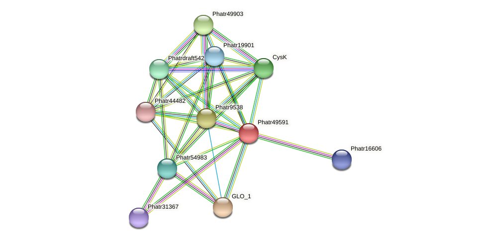 Phatr49591 protein (Phaeodactylum tricornutum) - STRING interaction network