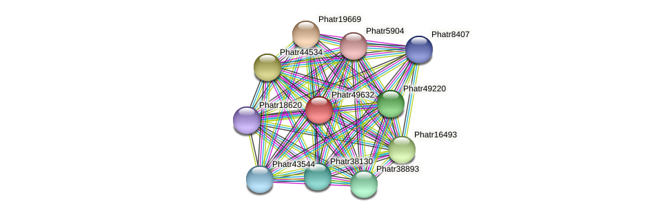 Phatr49632 protein (Phaeodactylum tricornutum) - STRING interaction network