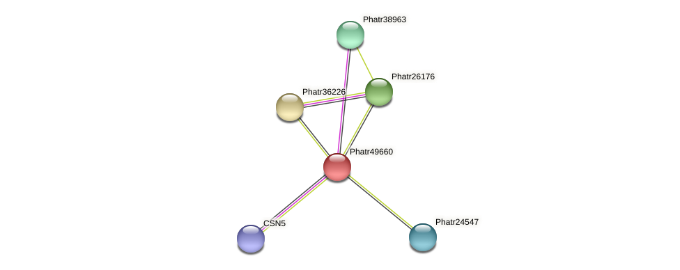Phatr49660 protein (Phaeodactylum tricornutum) - STRING interaction network