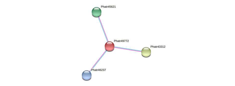 Phatr49772 protein (Phaeodactylum tricornutum) - STRING interaction network