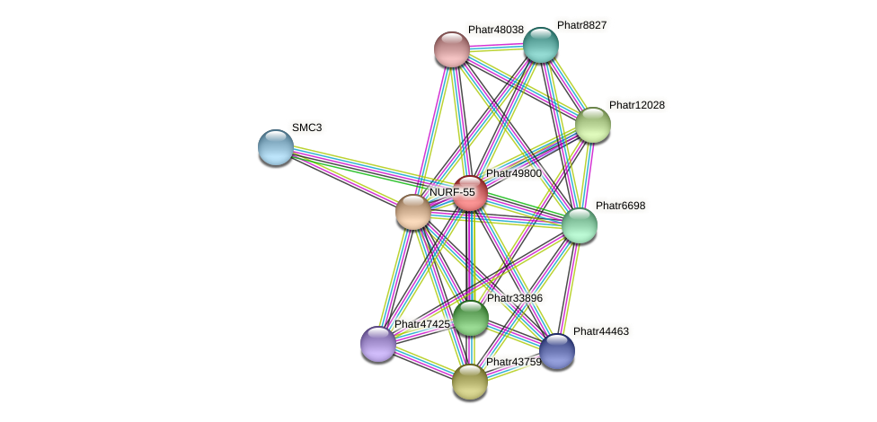 Phatr49800 protein (Phaeodactylum tricornutum) - STRING interaction network