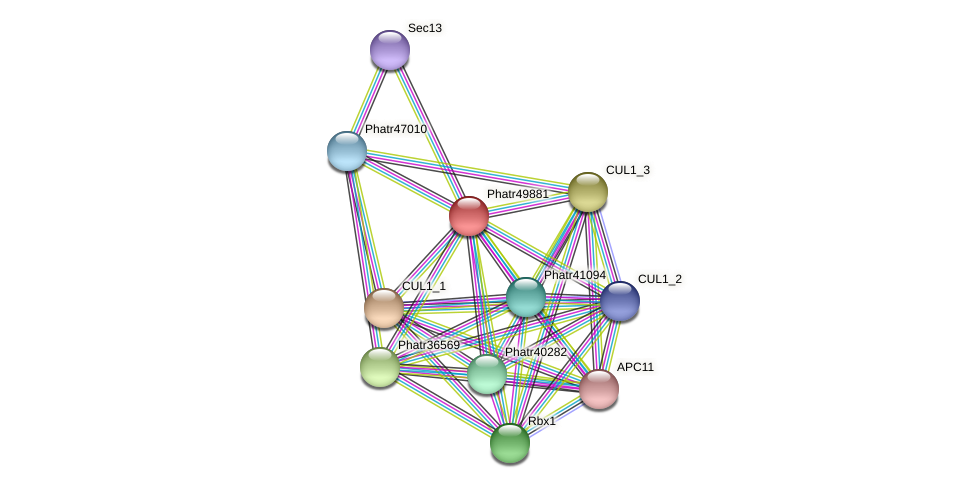 Phatr49881 protein (Phaeodactylum tricornutum) - STRING interaction network