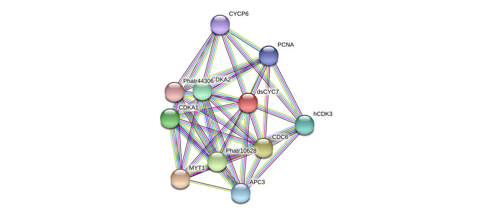 dsCYC7 protein (Phaeodactylum tricornutum) - STRING interaction network