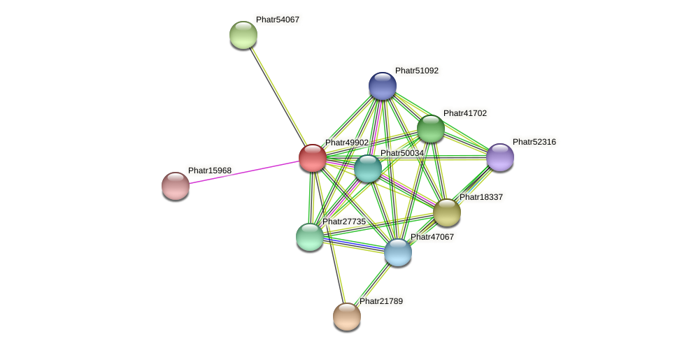 Phatr49902 protein (Phaeodactylum tricornutum) - STRING interaction network