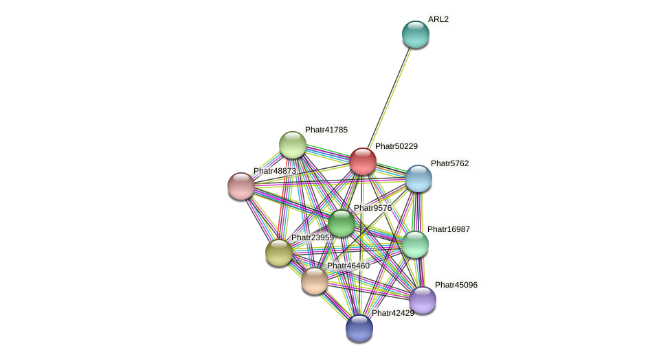 Phatr50229 protein (Phaeodactylum tricornutum) - STRING interaction network