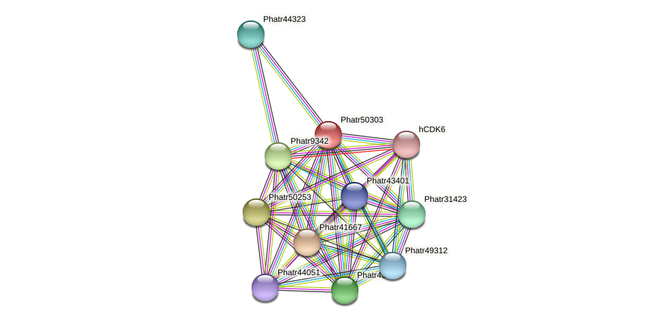 Phatr50303 protein (Phaeodactylum tricornutum) - STRING interaction network