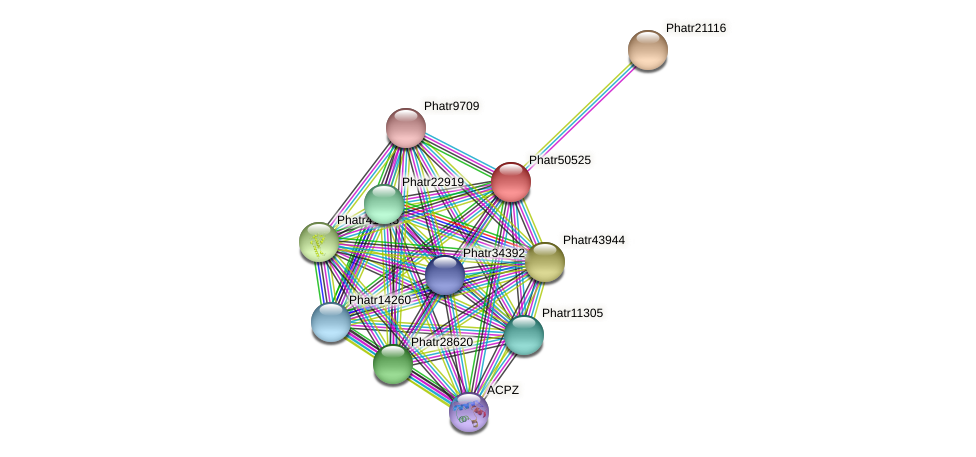 Phatr50525 protein (Phaeodactylum tricornutum) - STRING interaction network