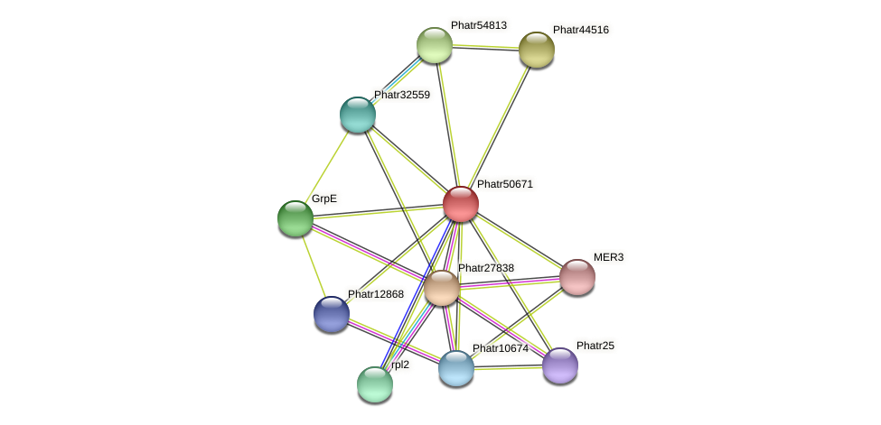 Phatr50671 protein (Phaeodactylum tricornutum) - STRING interaction network