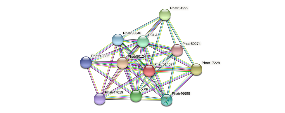 Phatr51407 protein (Phaeodactylum tricornutum) - STRING interaction network