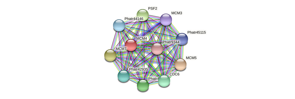 MCM4 protein (Phaeodactylum tricornutum) - STRING interaction network