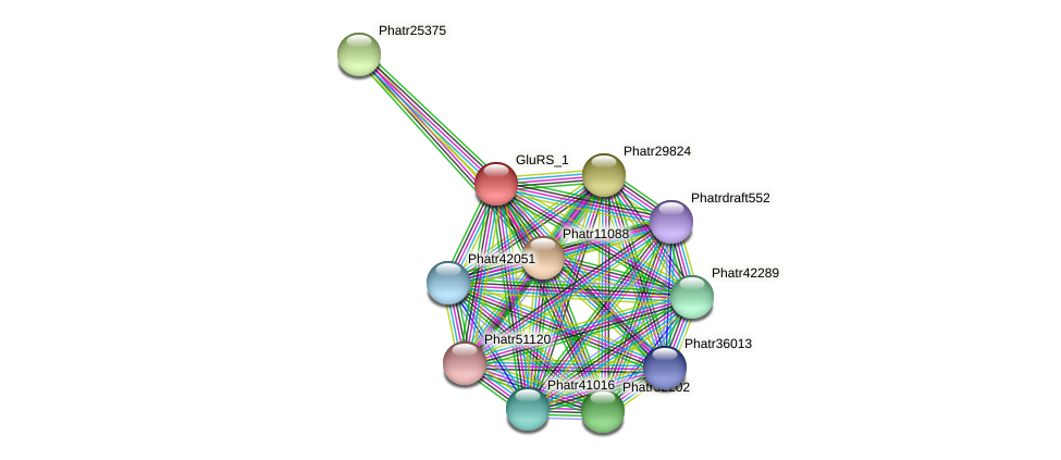 GluRS_1 protein (Phaeodactylum tricornutum) - STRING interaction network
