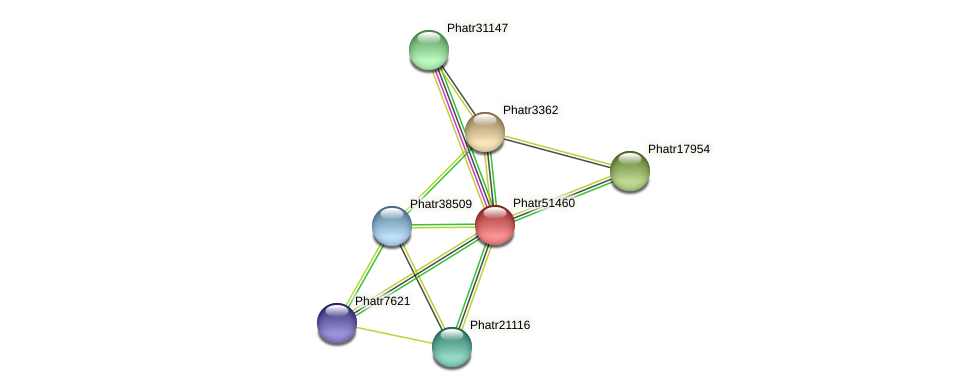 Phatr51460 protein (Phaeodactylum tricornutum) - STRING interaction network