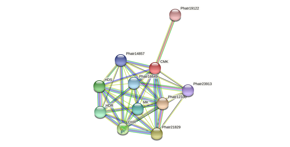 CMK protein (Phaeodactylum tricornutum) - STRING interaction network