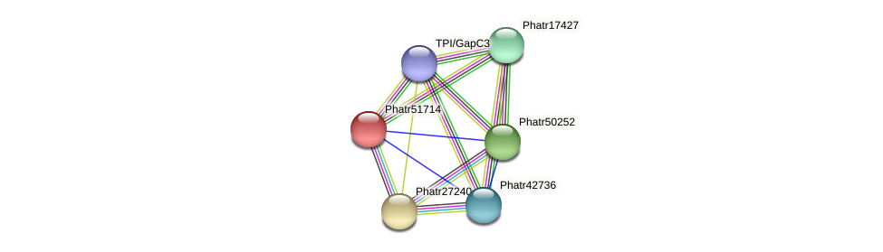 Phatr51714 protein (Phaeodactylum tricornutum) - STRING interaction network