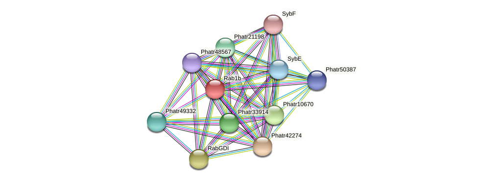 Rab1b protein (Phaeodactylum tricornutum) - STRING interaction network