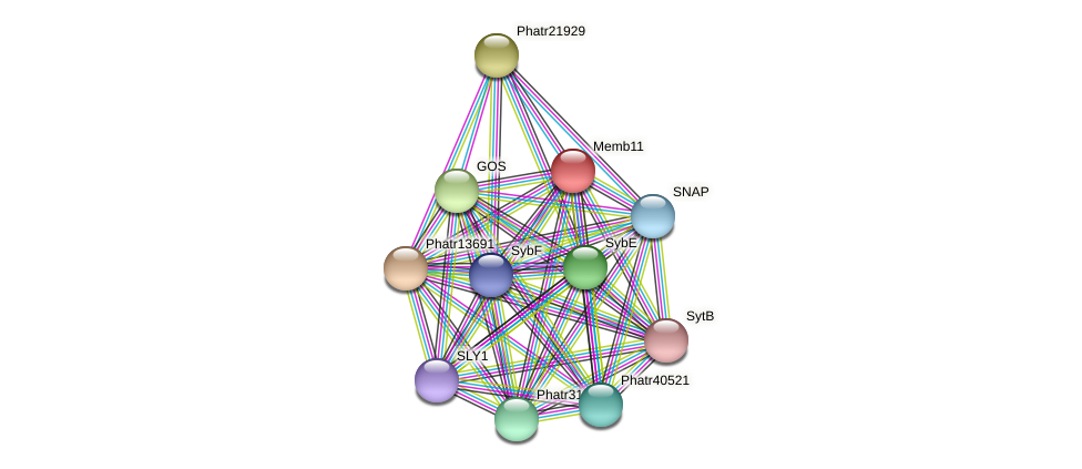 Memb11 protein (Phaeodactylum tricornutum) - STRING interaction network