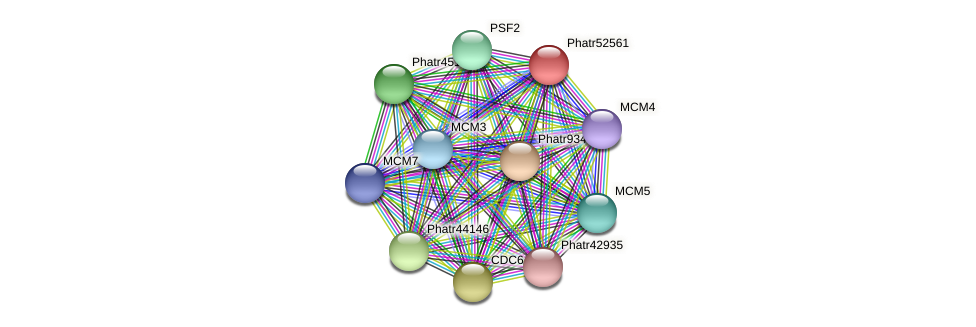 Phatr52561 protein (Phaeodactylum tricornutum) - STRING interaction network