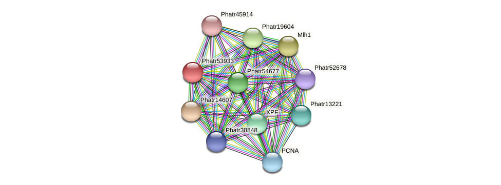 Phatr53933 protein (Phaeodactylum tricornutum) - STRING interaction network