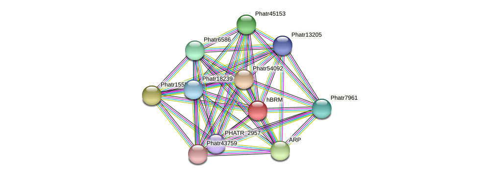 hBRM protein (Phaeodactylum tricornutum) - STRING interaction network