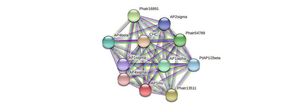 AP1mu protein (Phaeodactylum tricornutum) - STRING interaction network