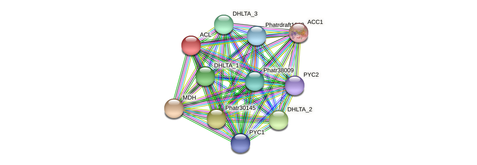 ACL protein (Phaeodactylum tricornutum) - STRING interaction network