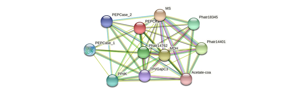 PEPCK1 protein (Phaeodactylum tricornutum) - STRING interaction network