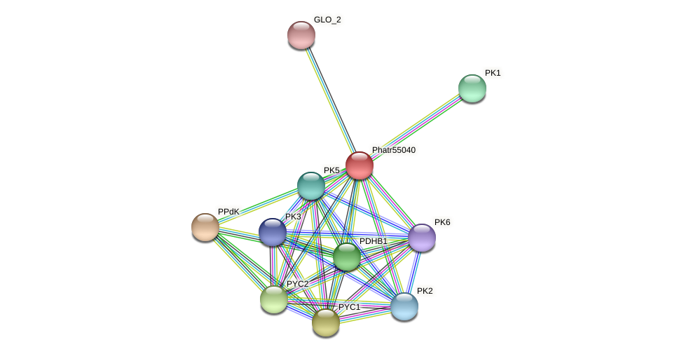 Phatr55040 protein (Phaeodactylum tricornutum) - STRING interaction network