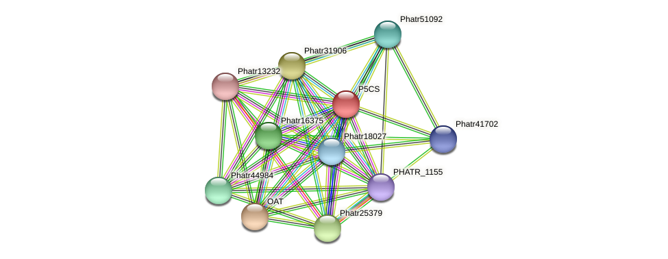 P5CS protein (Phaeodactylum tricornutum) - STRING interaction network