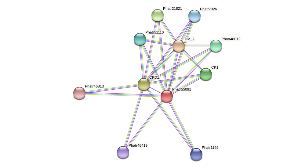 Phatr55091 protein (Phaeodactylum tricornutum) - STRING interaction network