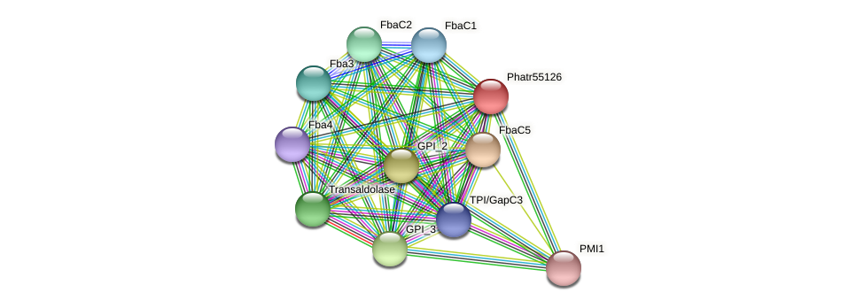 Phatr55126 protein (Phaeodactylum tricornutum) - STRING interaction network