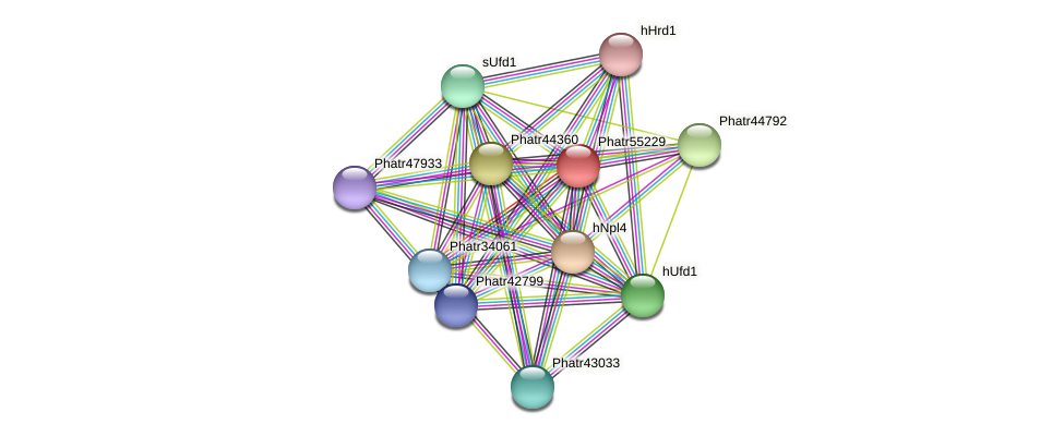 Phatr55229 protein (Phaeodactylum tricornutum) - STRING interaction network