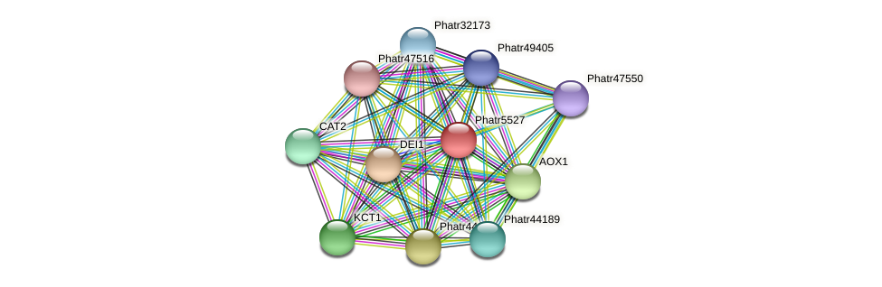 Phatr5527 protein (Phaeodactylum tricornutum) - STRING interaction network