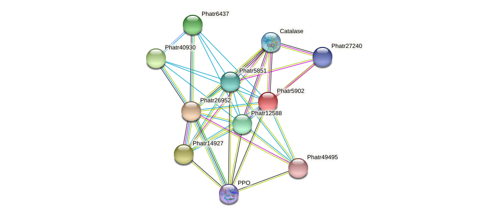 Phatr5902 protein (Phaeodactylum tricornutum) - STRING interaction network