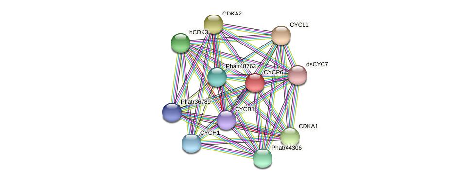 CYCP6 protein (Phaeodactylum tricornutum) - STRING interaction network