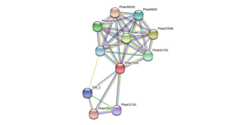 Phatr7026 protein (Phaeodactylum tricornutum) - STRING interaction network